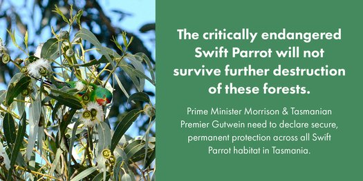 image of Save Swift Parrots